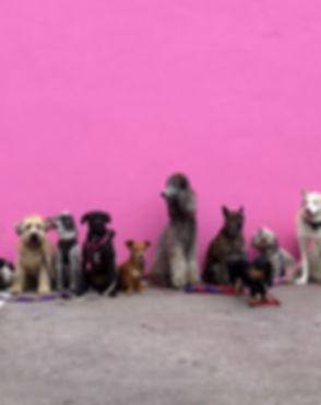 Pink Wall Full of Dogs_edited.jpg
