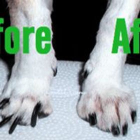 Nails Before and After.jpg