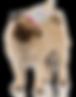birthday-hat-pug-234x300.png