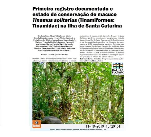 Biólogos do IMA colaboram em artigo sobre o primeiro registro de macuco na Ilha de Santa Catarina