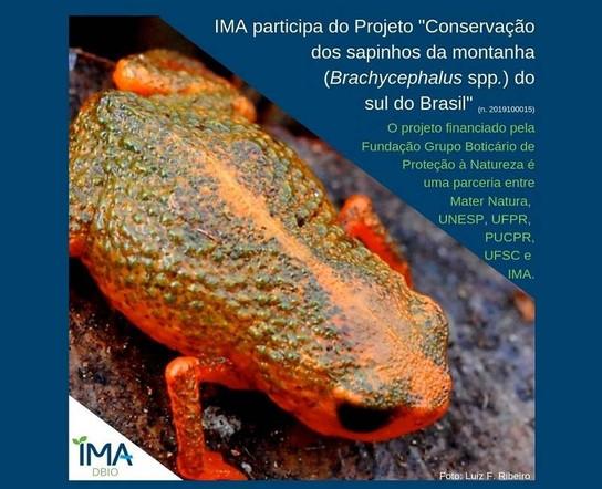 Biólogo do IMA participa de projeto de conservação do Brachycephalu spp.