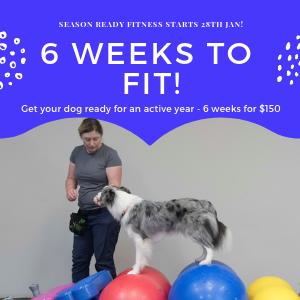 6 Weeks to Fit! - ONLINE