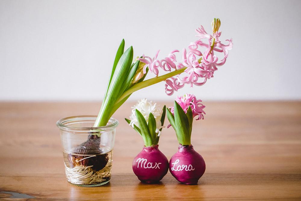 Gastgeschenk DIY Blumenzwiebeln