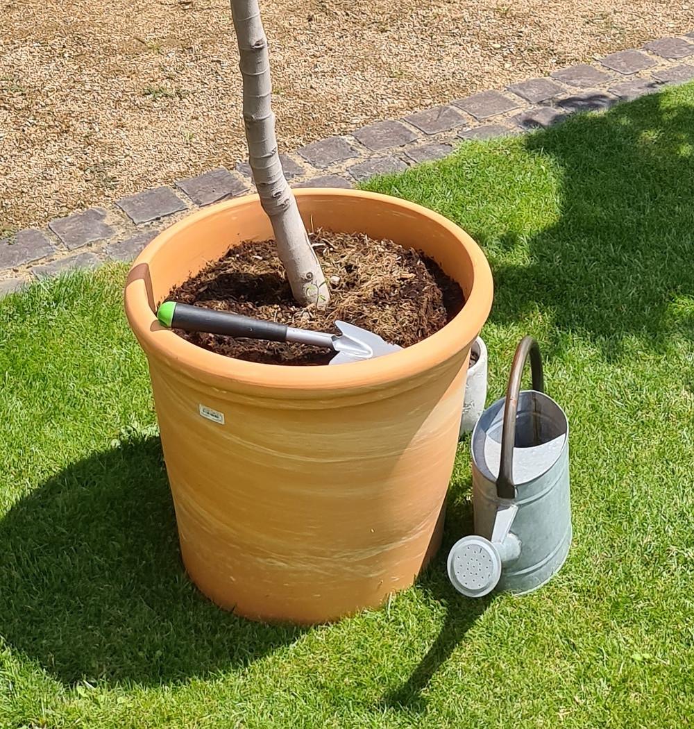 Baum pflanzen als Ritual