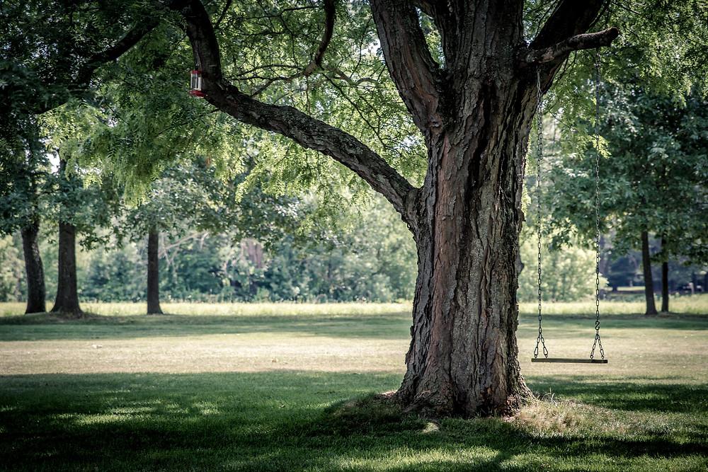 Baum pflanzen als symbolische Handlung