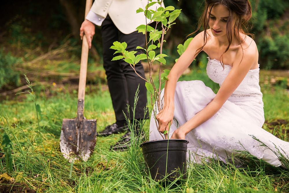 Baum pflanzen Trauritual freie Trauung