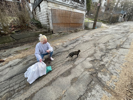 KITTY ACTIVISTS: 'Community cat' volunteers plan mass trapping event April 11