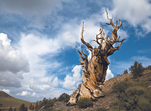 The oldest living things on this planet have a lot to teach