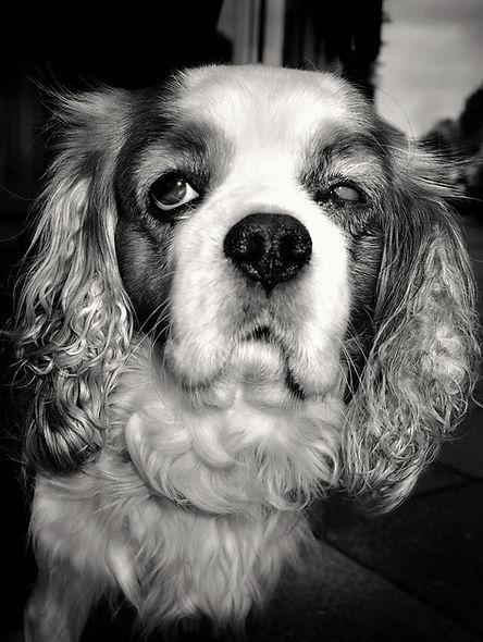 blinddog–v2_kopiea6.jpg