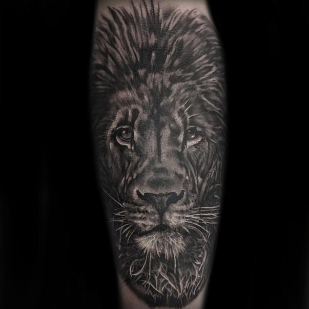 big_lion.jpg