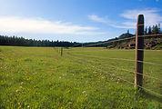 grass pasture.jpg