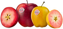 Demand for red-fleshed Kissabel® apples continues to outstrip supply
