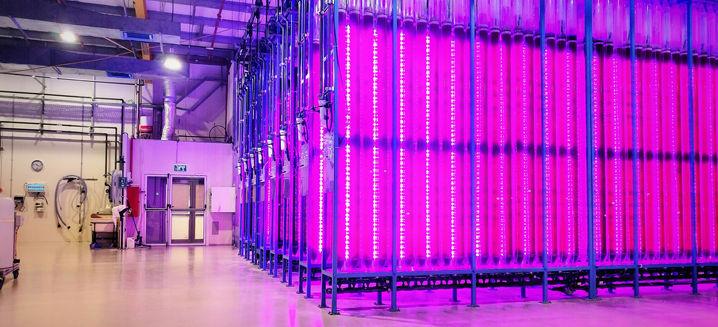 Yemoja opens sustainable microalgae prod