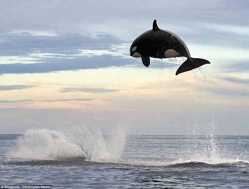 jump high .....