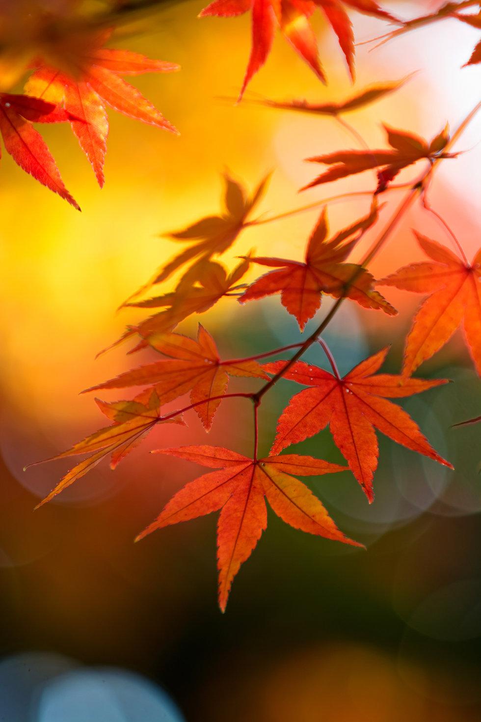 Japanese garden .jpg