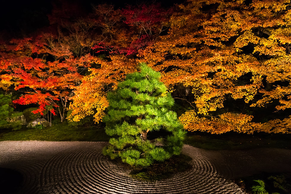 Night view of Zen-style Japanese garden