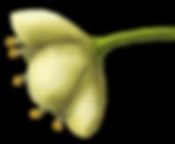 Casearia sylvestrys