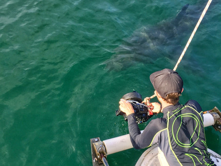 South Africa - Filming white sharks