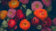 Colorful%20Flowers_edited.jpg