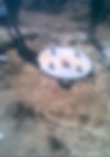 pronto bio toilet installed tank