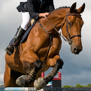 Equine Health Report (HPP)
