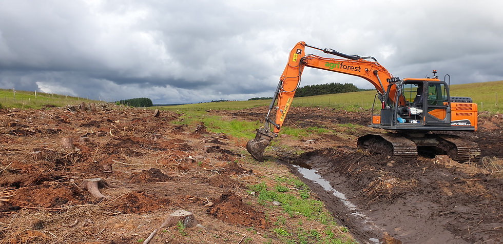 Forestry ground prep and drainage.jpg