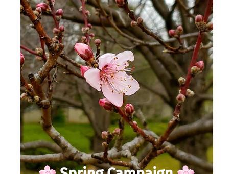 🌸春のキャンペーン🌸SPRING Campaign🌸
