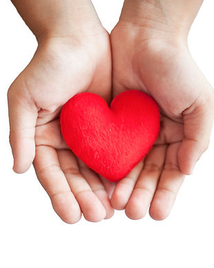 hands hold a red heart on white backgrou