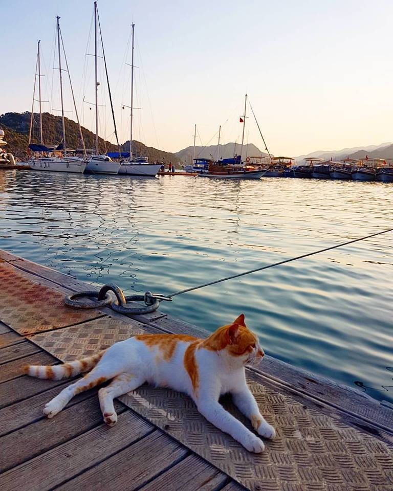 Lucky cats of Kekova