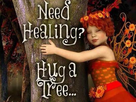 Knuffel eens een boom