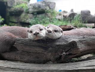 Battersea Park Children's Zoo crowdfunder extension