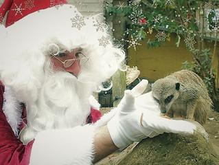 Santa at the Children's Zoo