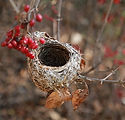 the-birds-nest-3826363_640.jpg