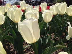 весна в Никитском саду