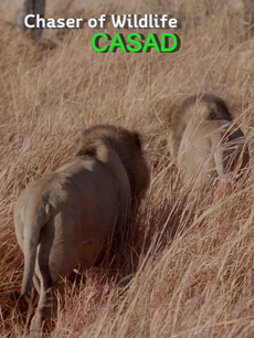 CHASER OF WILDLIFE, CASAD