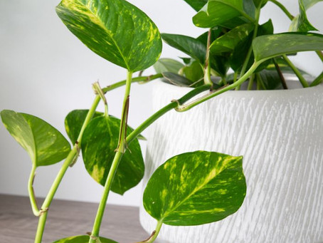 5 Easy To Care For Indoor Plants: