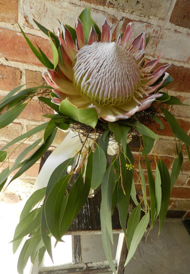 Buds n roses - King protea