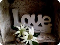 Buds n roses - flannel flower