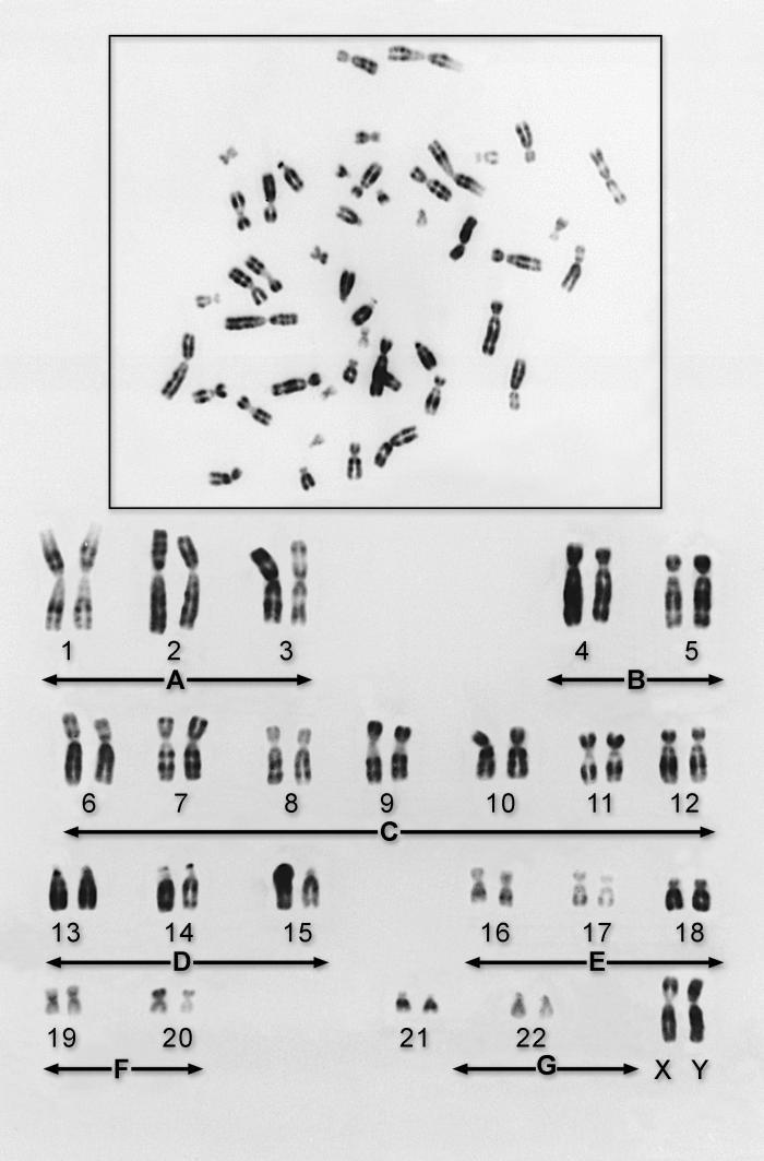 genotype genes
