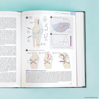Biomechanics of the Knee Joint