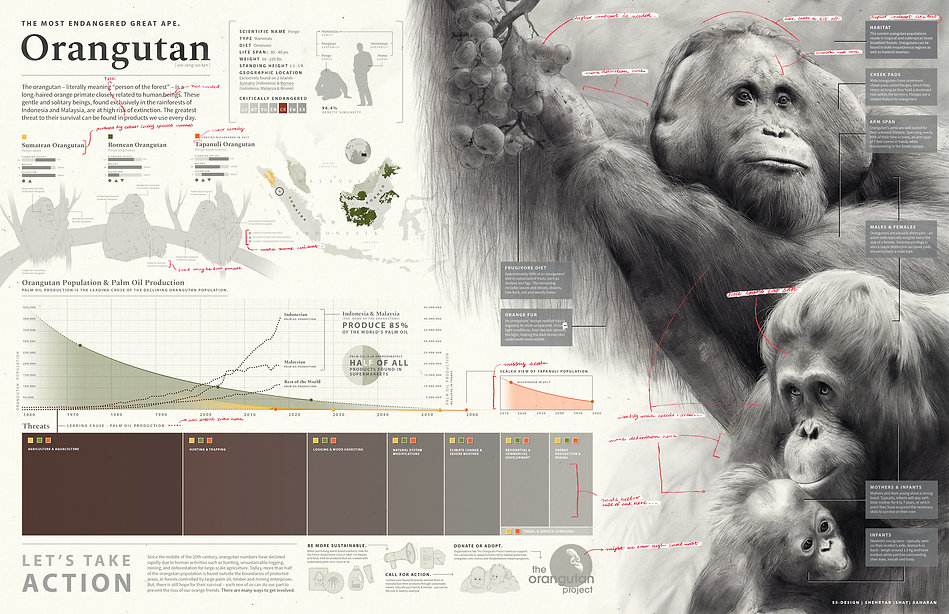 Orangutan_Edits copy.jpg