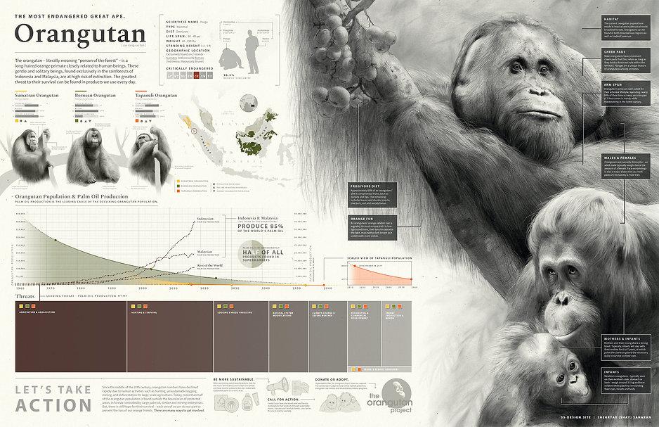 ShayS_OrangutanInfoGraphic.jpg