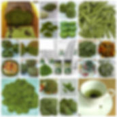 phytomeal, phytosalt, phyto corporation, salicornia, 파이토 밀, 파이토 솔