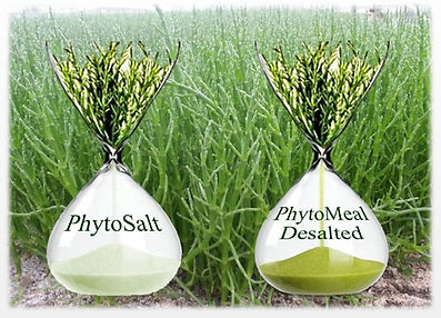 Phyto Corporation has developed the world's first desalted salicornia
