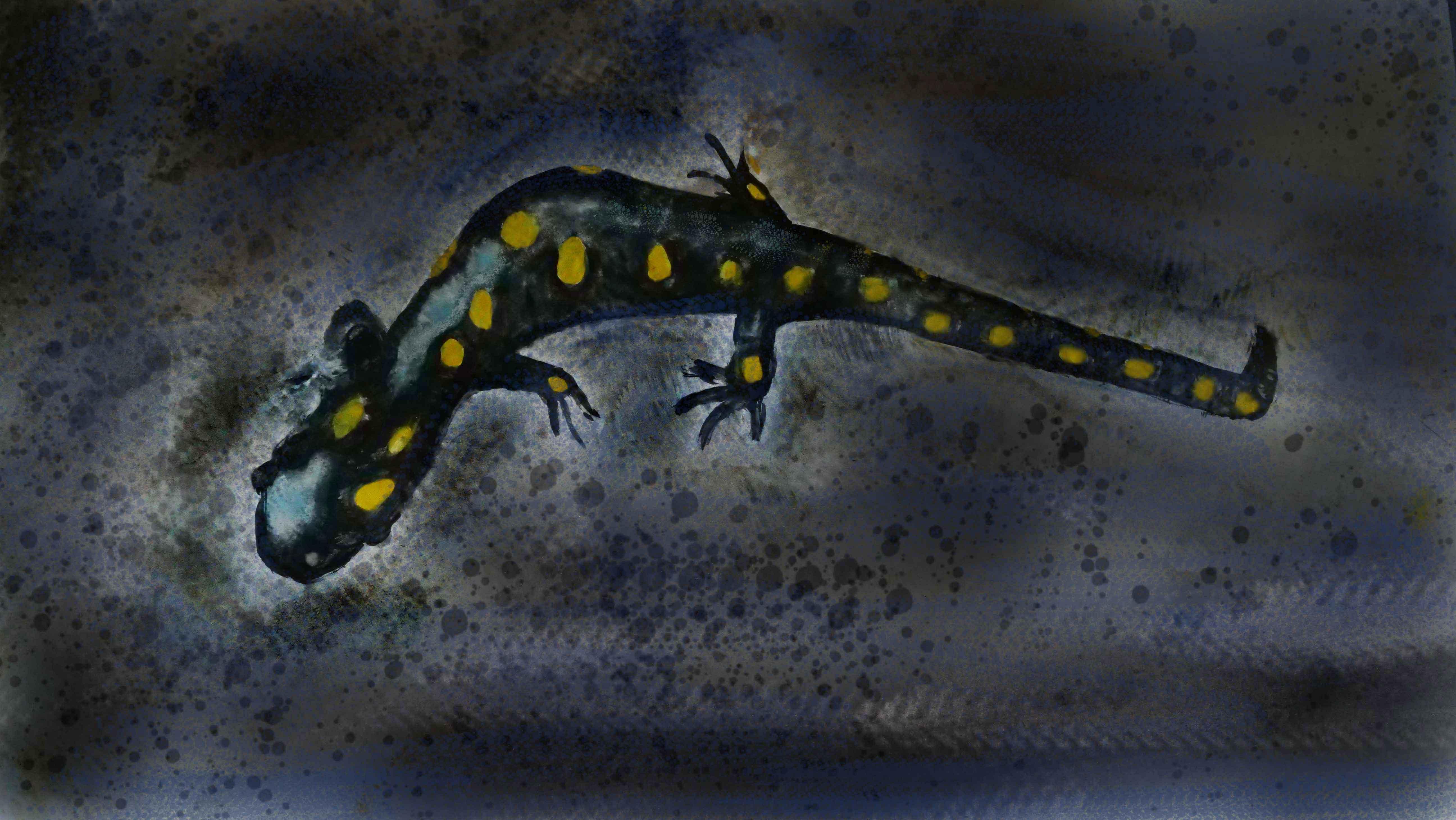 1 jf marche dans la nuit - salamandre