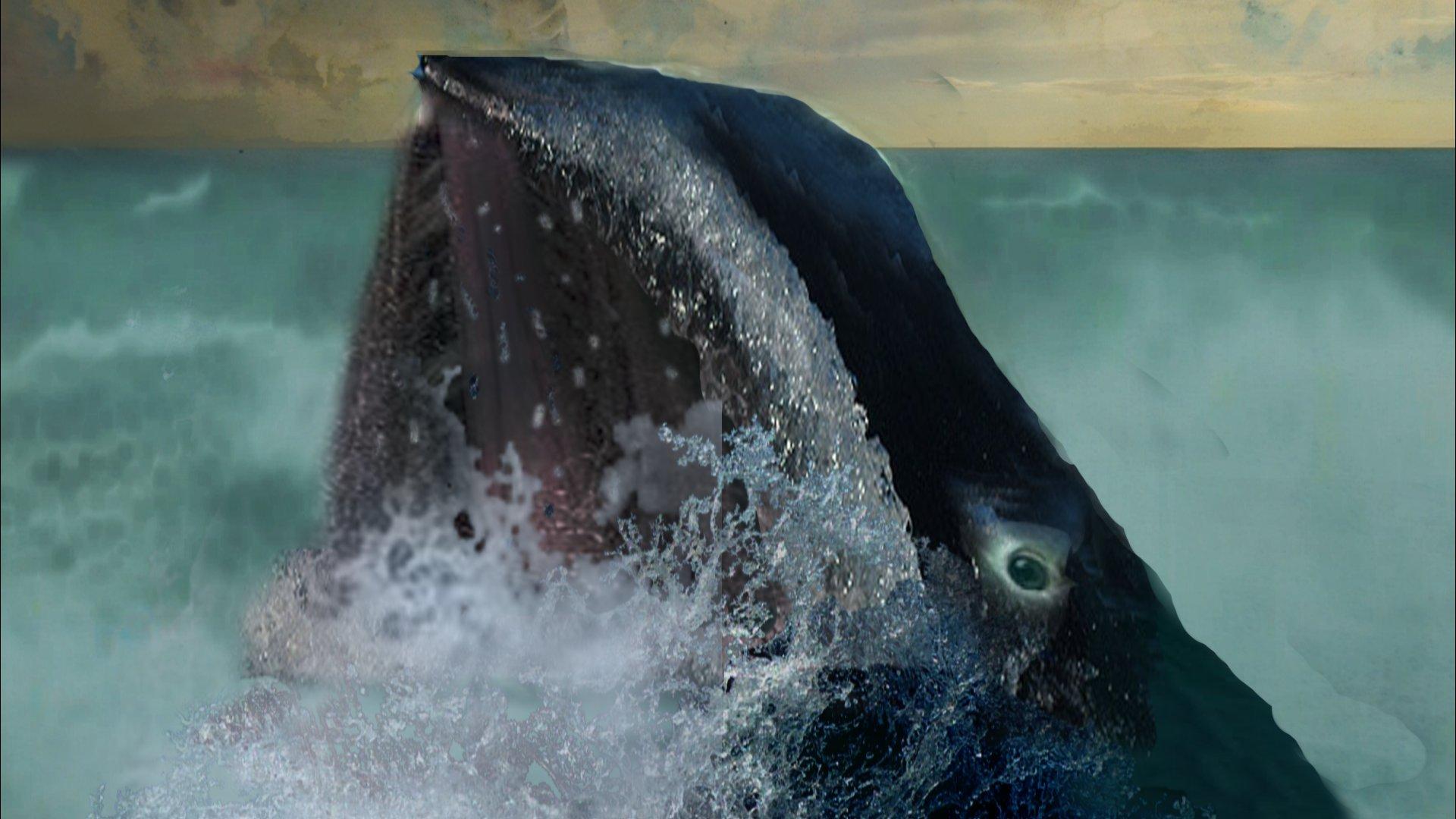 Tête de la baleine, photographie et gouache, 2019