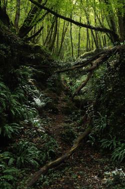 chemin, photographie, 2019