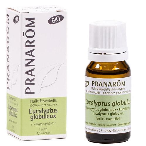Etherische olie Eucalyptus globulus (Eucalyptus glob.) BIO - 10 ml