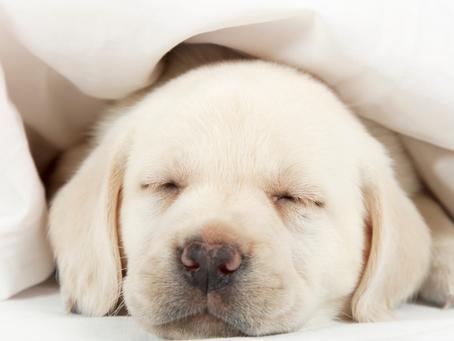 Sleep Like a Pro.