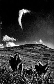 Font d'Urle , nuage et gentiane.jpg